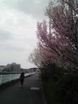 '10桜.JPG